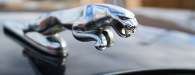 21_jaguar